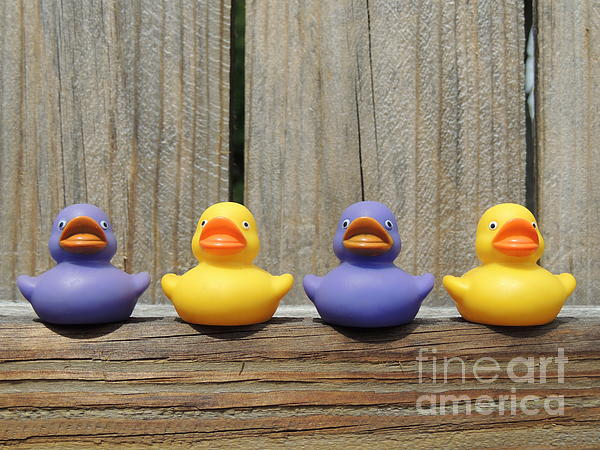 Kathy Brown - Rubber Duckies on Fence