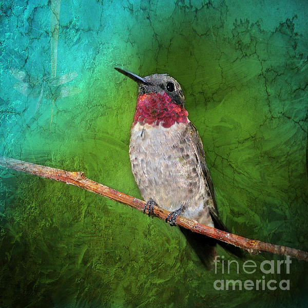 Ruby Throated Hummingbird Print by Betty LaRue