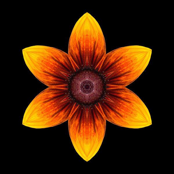 Rudbeckia I Flower Mandala Print by David J Bookbinder
