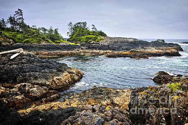 Rugged Coast Of Pacific Ocean On Vancouver Island Print by Elena Elisseeva
