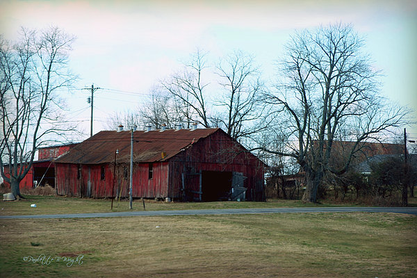 Rugged Shed II Print by Paulette B Wright