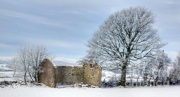 Rural Winter Print by David Birchall