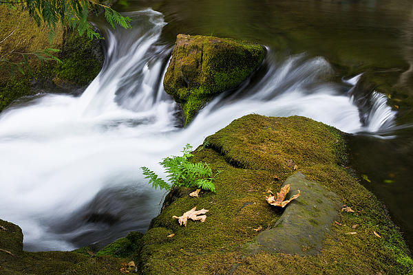 Rushing Water At Whatcom Falls Park Print by Priya Ghose