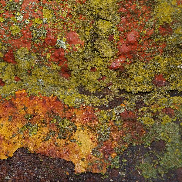 Rusty Print by Tom Druin