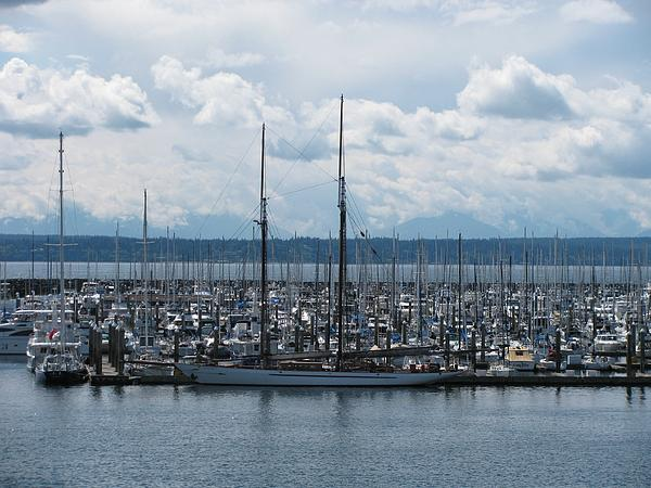 Sailboats In Seattle Print by Steven Parker