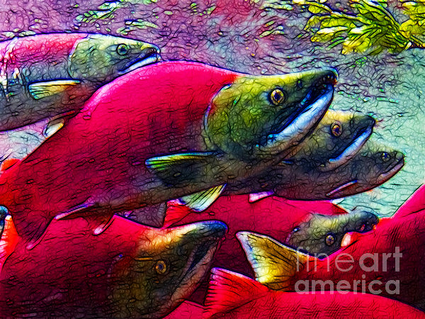 Salmon Run Print by Wingsdomain Art and Photography