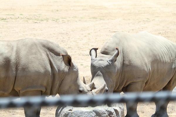 San Diego Zoo - 1212289 Print by DC Photographer