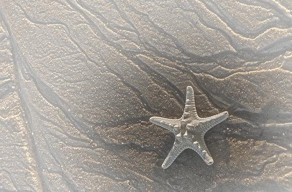 Sand Prints And Starfish II Print by Susan Candelario