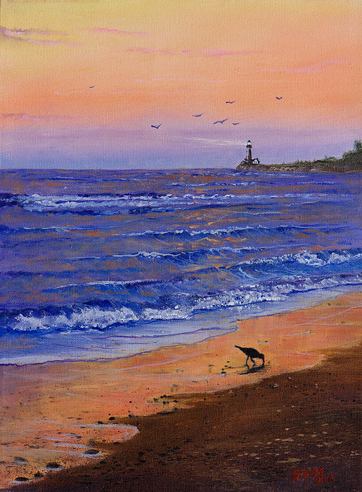 Sandpiper At Sunset Print by C Steele