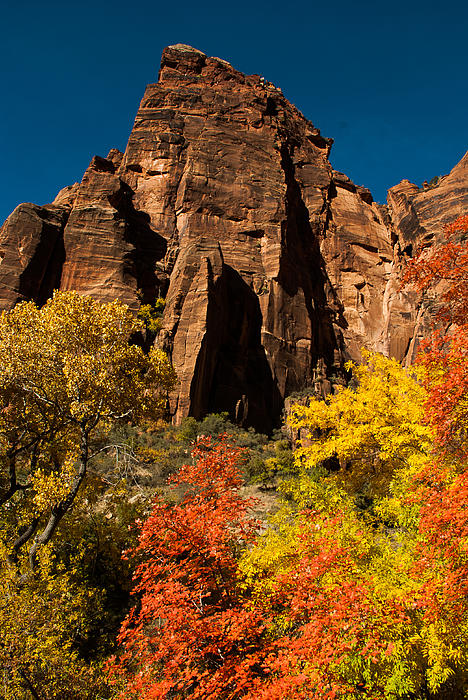 Sandstone Cliffs And Fall Colors Zion National Park Print by Robert Ford