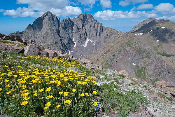 Cascade Colors - Sangre de Cristos Crestone Peak and Wildflowers