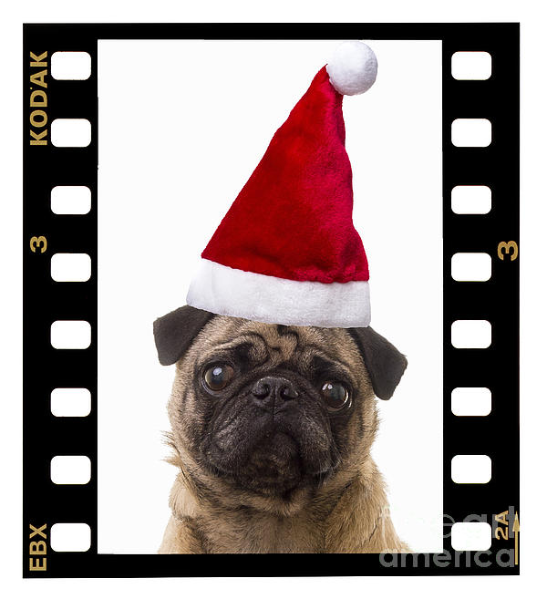 Santa Pug - Canine Christmas Print by Edward Fielding