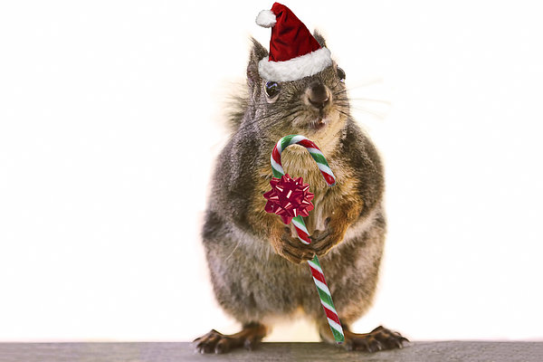Peggy Collins - Santa Squirrel and Candy Cane