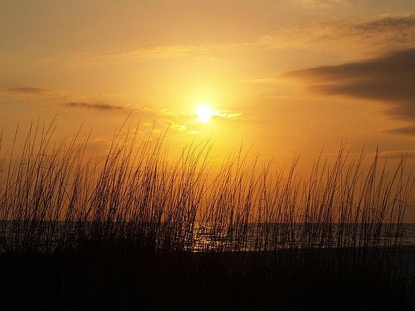 Athala Carole Bruckner - Sarasota Sunset