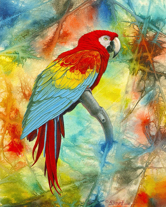 Scarlet Macaw In Abstract Print by Paul Krapf