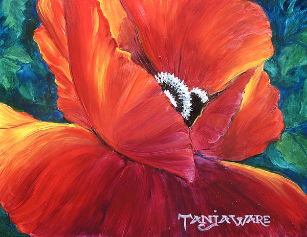 Scarlet Poppy Print by Tanja Ware