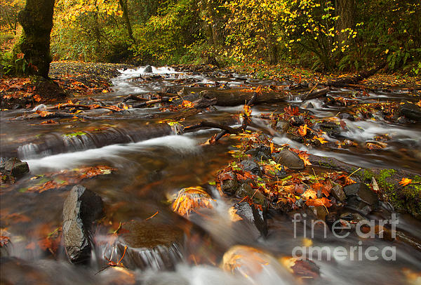 Scattered Leaves Print by Mike  Dawson