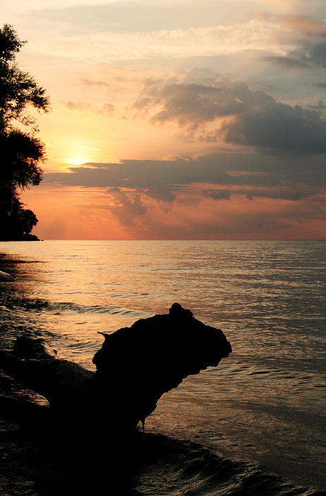 Scenic Beach Driftwood Sunset Print by Heather Allen