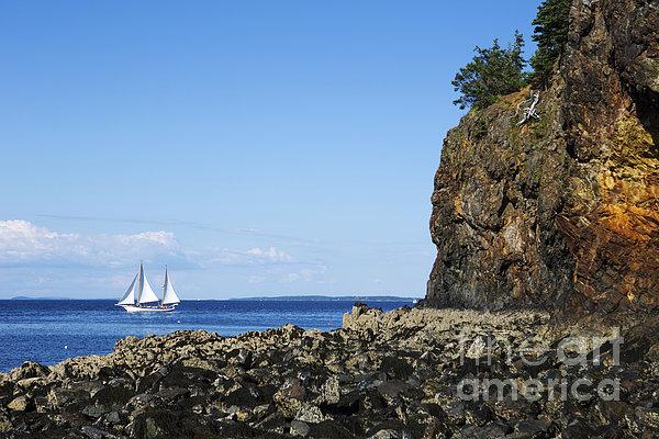 Schooner Sailing In The Bay Print by Diane Diederich