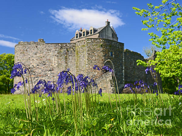 Scots Spring Bluebell Flowers At Scotland Dunstaffnage Castle  Print by Nature Scapes Fine Art