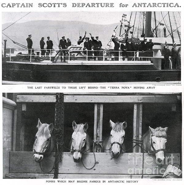 Scotts Departure For Antarctica Ponies Print by Mary Evans