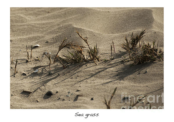 Sea Grass Print by Artist and Photographer Laura Wrede
