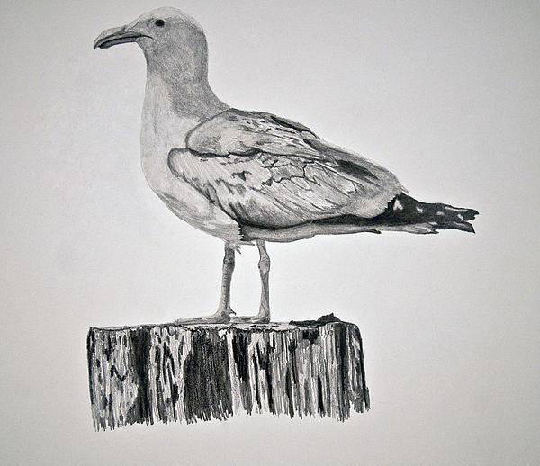 Seagull Print by Chamar Radloff
