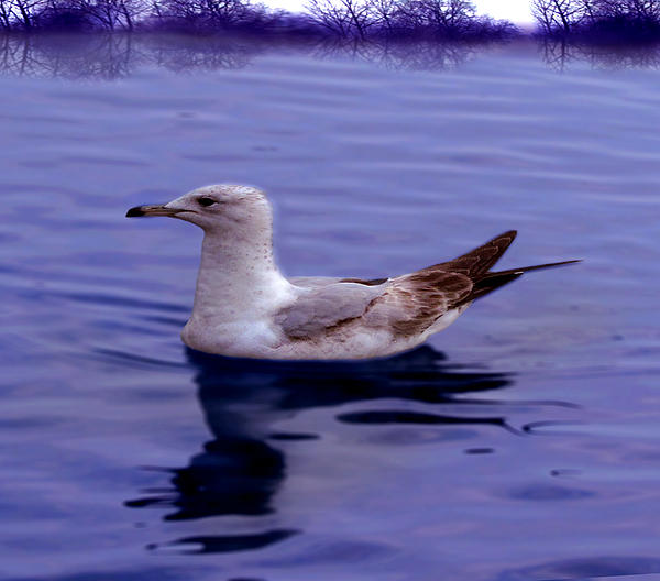 Seagull In Blue Print by Sakna T