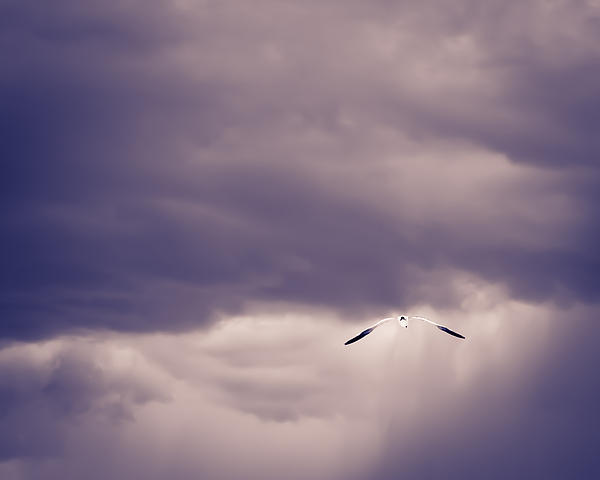 Seagull In The Storm Print by Jerri Moon Cantone