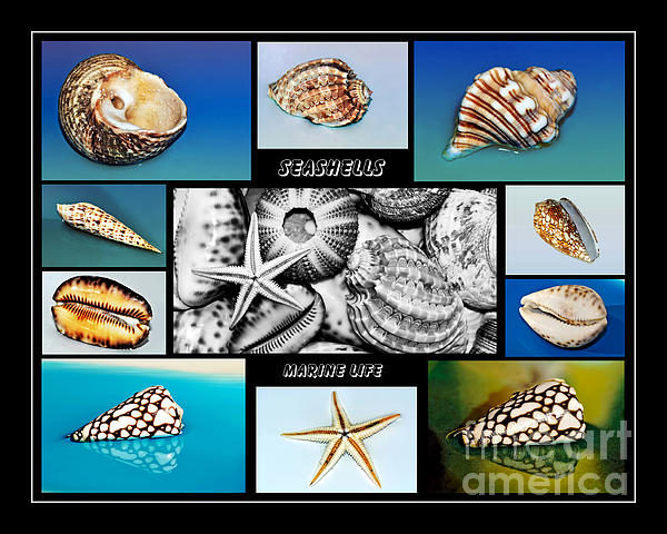 Seashell Collection Print by Kaye Menner