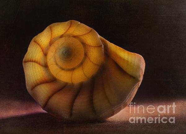 Seashell Print by Elena Nosyreva