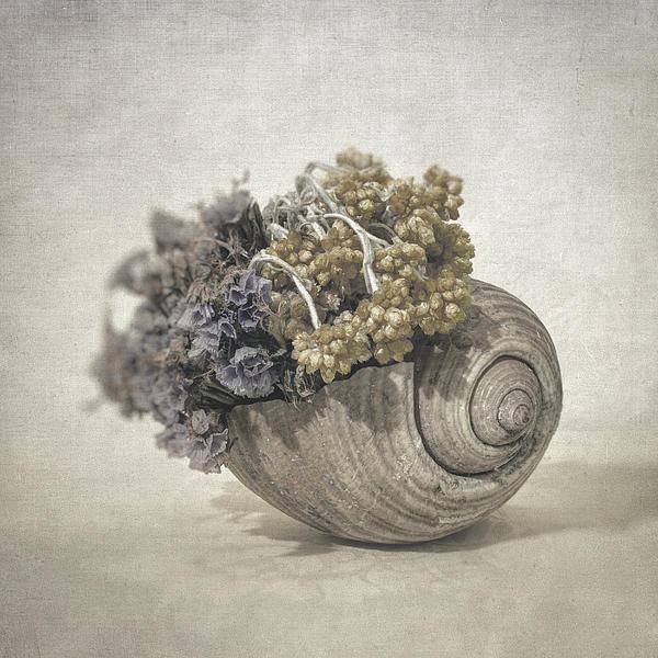 Seashell No.2 Print by Taylan Soyturk