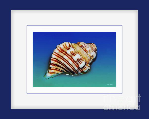 Seashell Wall Art 1 - Blue Frame Print by Kaye Menner