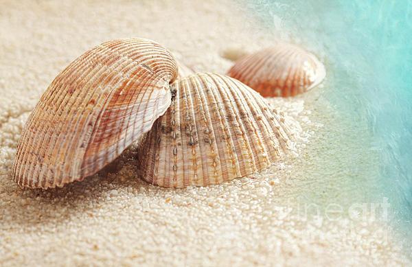 Seashells In The Wet Sand Print by Sandra Cunningham