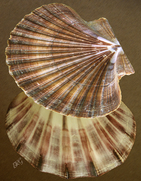 Seashells Spectacular No 54 Print by Ben and Raisa Gertsberg