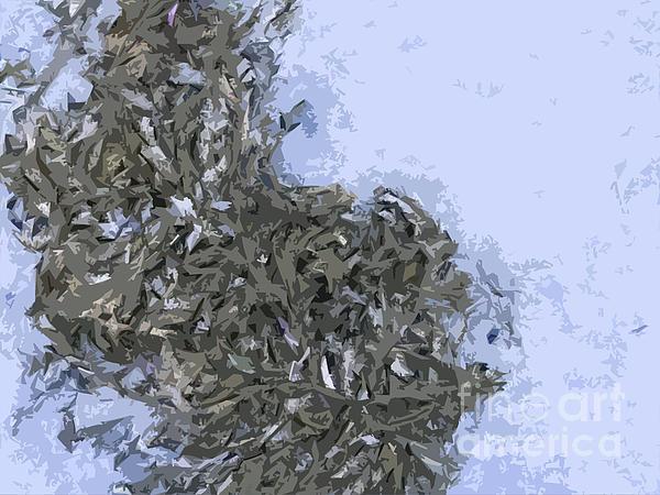 Seaweed Print by Carol Lynch