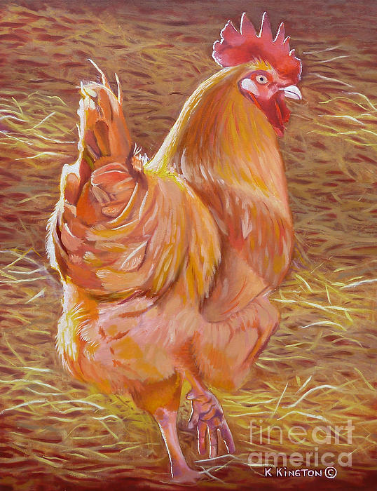 K Kingston - Sebastopol Rooster