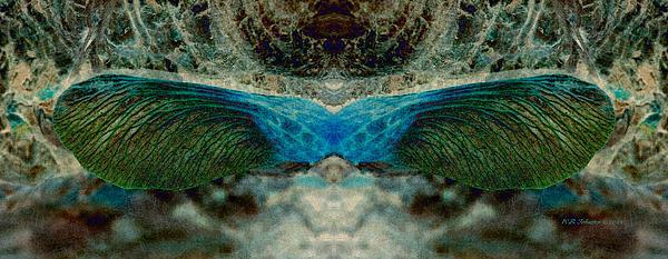 Seedwings Print by WB Johnston