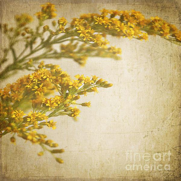 Sepia Gold Print by Lyn Randle