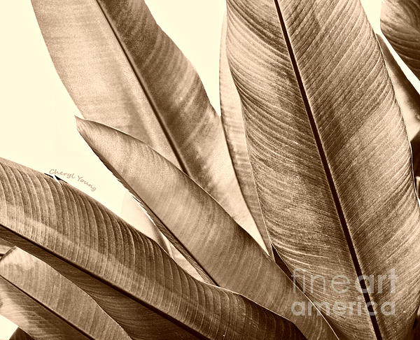 Sepia Leaves Print by Cheryl Young