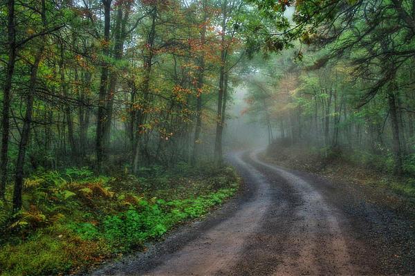 Lori Deiter - September Mist