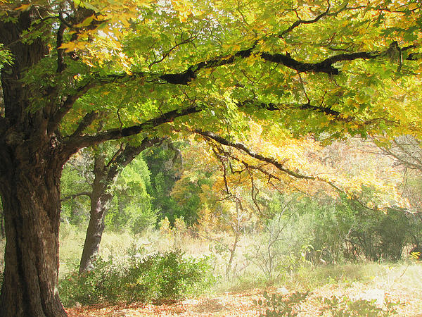 Serenity Print by Wendy J St Christopher