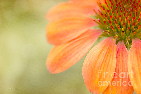 Shades Of Summer Print by Reflective Moment Photography And Digital Art Images