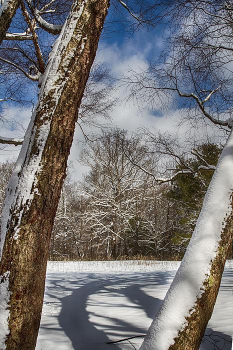 Shadows On The Snow Print by John Haldane
