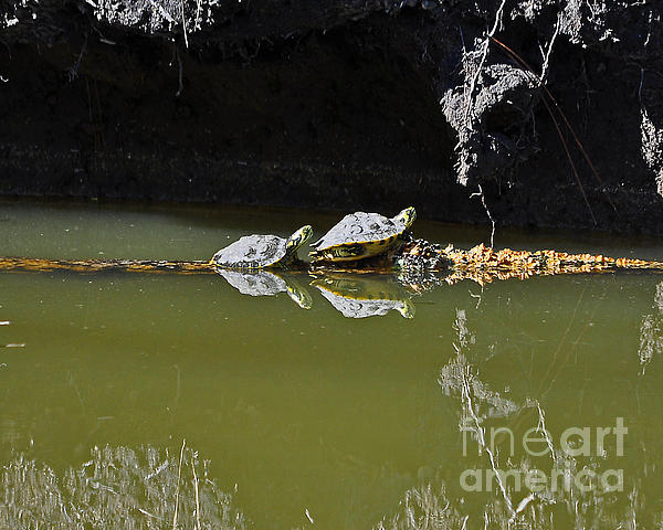 Sharing Sliders Print by Al Powell Photography USA