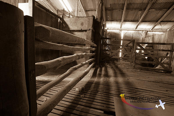 Shearing Shed Print by Michael Wignall