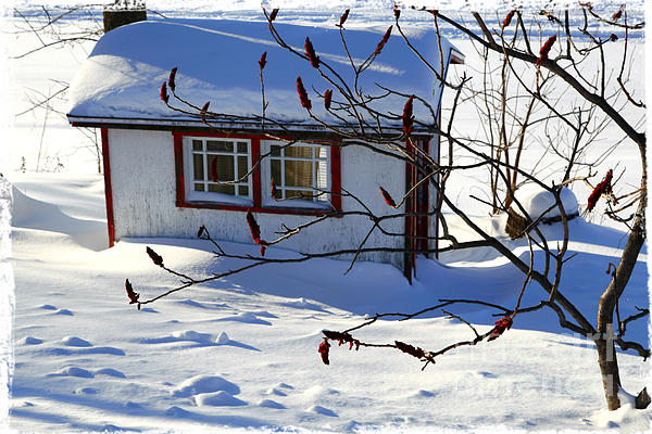 Shed In Winter Print by Sophie Vigneault