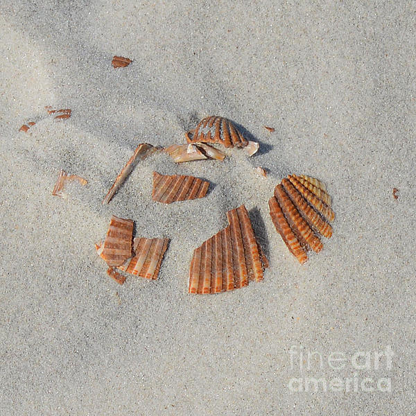Shell Jigsaw Print by Meandering Photography