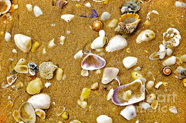 Shells In The Sand Print by Kaye Menner