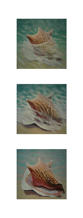 Shells Triptych 2 Print by Don Young